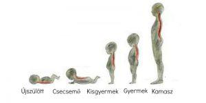 Gyermekkori gerincferdülés, helytelen testtartás, gerincfájdalom6
